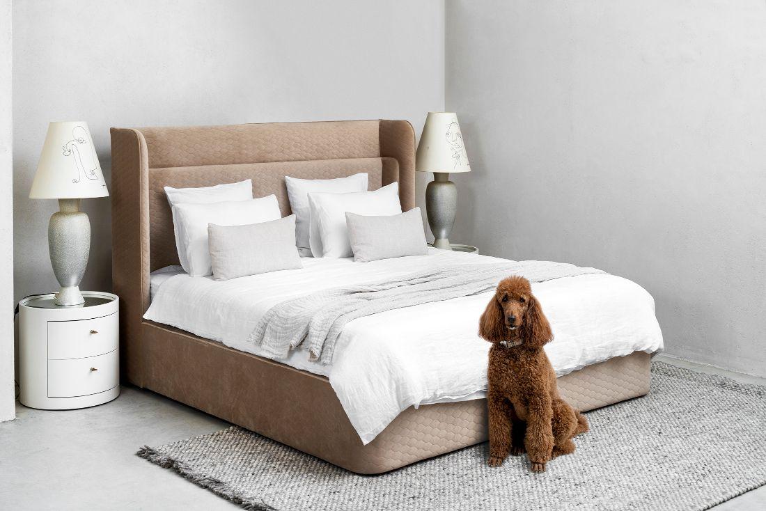מיטה מעוצבת יוקרתית בכרמי ריהוט יוקרה עם כלב חום